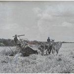 Town Lecture - A Lifetime in Farming - Richard Garnham